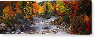 Stream With Trees In A Forest Canvas Print by Panoramic Images