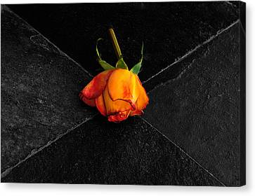 Canvas Print featuring the photograph Street Rose by Marwan Khoury