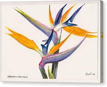 Strelitzia Flowers Canvas Print