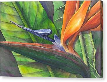 Strelitzia Reginae Canvas Print