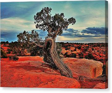 Strength Canvas Print by Benjamin Yeager
