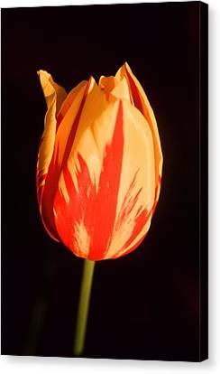 Strength Of A Flower Canvas Print by Jonathan Michael Bowman