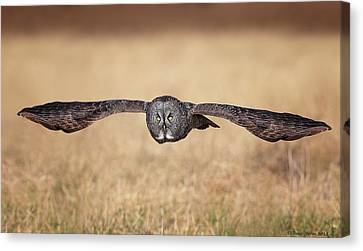 Stretched Out Canvas Print by Daniel Behm