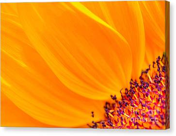 Canvas Print featuring the photograph Stretching Out by Jim Carrell