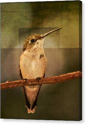 Strike A Hummingbird Pose Canvas Print
