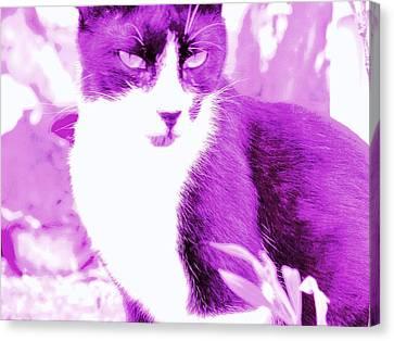 Strike Violet Canvas Print by Anita Dale Livaditis
