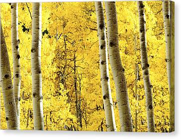 Striking It Rich Canvas Print by The Forests Edge Photography - Diane Sandoval