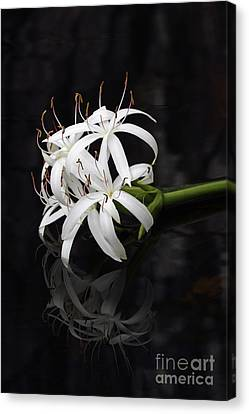 Canvas Print featuring the photograph String Lily #1 by Paul Rebmann