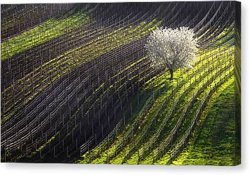 Strings Of Spring Canvas Print