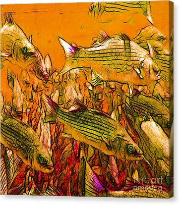 Striped Bass - Square Canvas Print by Wingsdomain Art and Photography