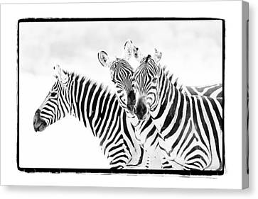 Canvas Print featuring the photograph Striped Threesome by Mike Gaudaur