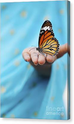 Striped Tiger Butterfly Canvas Print by Tim Gainey
