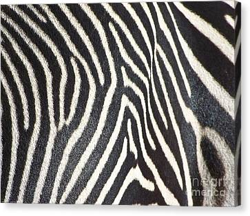 Stripes And Ripples Canvas Print by Kathy McClure