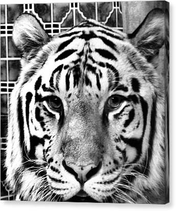 Stripes Canvas Print by Dan Sproul