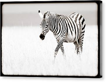 Canvas Print featuring the photograph Stripes On The Move by Mike Gaudaur