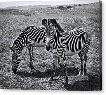 Stripes Duo Canvas Print