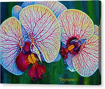Stripped Ladies Canvas Print by Tanja Ware
