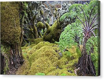 Strohblumengebuesch With Moss Canvas Print by Martin Zwick