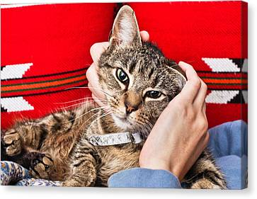 Stroking A Cat Canvas Print by Tom Gowanlock