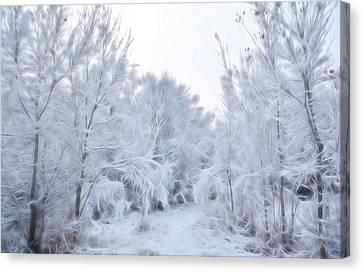 Stroll Through A Winter Wonderland Canvas Print