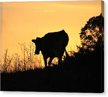 Canvas Print featuring the photograph Strolling Into The Sunset by Penny Meyers