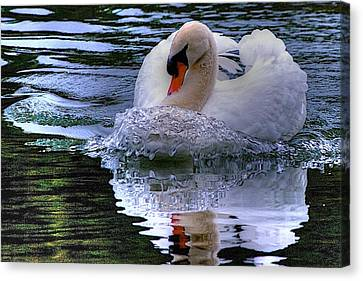 Strong Swimmer Canvas Print by Dennis Baswell
