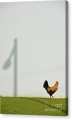 Strutting Over Shadows Canvas Print by Darla Wood