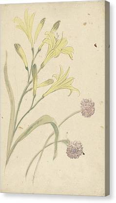 Studies Flower Of A Yellow Lily And A Blooming Onion Canvas Print by Quint Lox