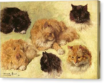 Portraits Of Cats Canvas Print - Studies Of Cats, 1895 by Henriette Ronner-Knip
