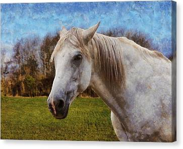 Study Of A Horse Canvas Print