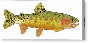 Study Of A Rio Grande Cutthroat Trout Canvas Print