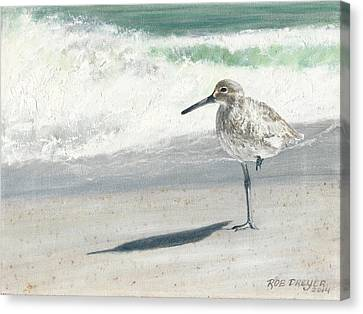 Study Of A Sandpiper Canvas Print by Rob Dreyer