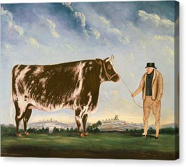 Reins Canvas Print - Study Of A Shorthorn by William Joseph Shayer