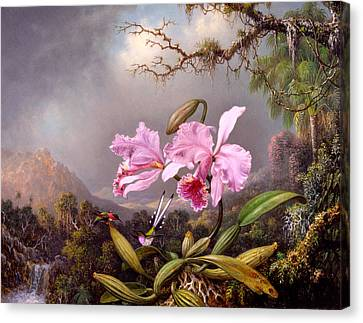 Humming Birds Canvas Print - Study Of An Orchid by Martin Johnson Heade