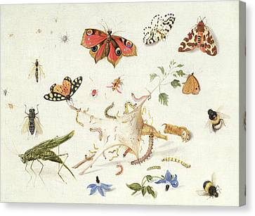 Study Of Insects And Flowers Canvas Print by Ferdinand van Kessel