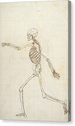Study Of The Human Figure, Lateral View, From A Comparative Anatomical Exposition Of The Structure Canvas Print