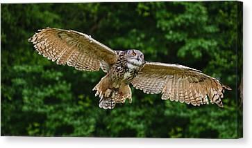 Stunning European Eagle Owl In Flight Canvas Print by Matthew Gibson
