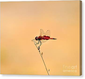 Stunning Saddlebags Canvas Print by Al Powell Photography USA