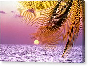 Stylized Tropical Scene With Violet Canvas Print by Panoramic Images