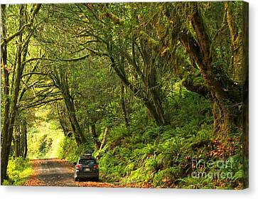 Subaru In The Rainforest Canvas Print by Adam Jewell