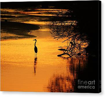 Sublime Silhouette Canvas Print