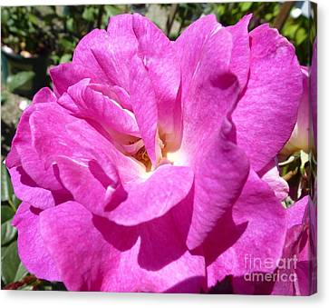 Sublime Tenderness  Canvas Print by Anat Gerards