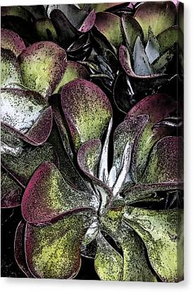Succulent At Backbone Valley Nursery Canvas Print by Greg Reed