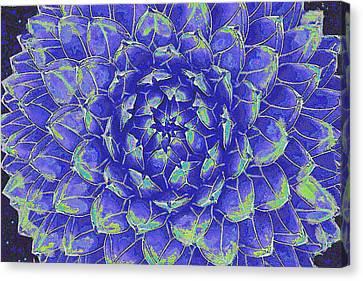 Succulent - Blue Canvas Print by Jane Schnetlage