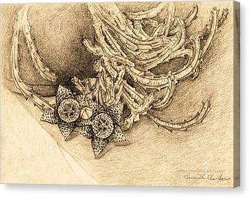 Succulent Flowers Canvas Print by Judith Chantler