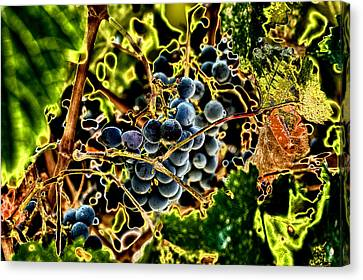 Succulent Grapes Canvas Print