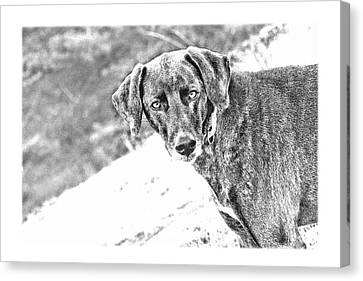 Such A Pretty Girl Canvas Print by Peggy Collins