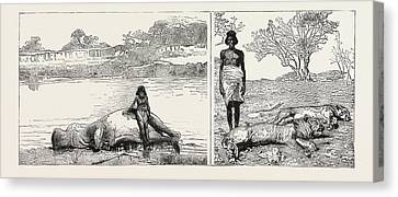 Sudan Hippopotamus And Salee Left A Lion And Lioness Right Canvas Print by English School