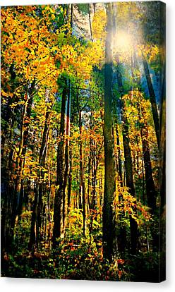 Suddenly Canvas Print by Diana Angstadt