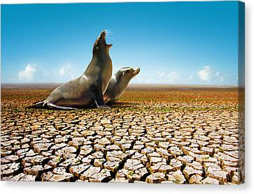 Suffering Seals Canvas Print by Carlos Caetano